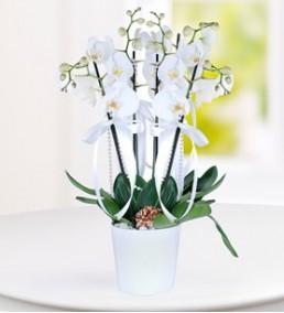 Elazığ Çiçek 26