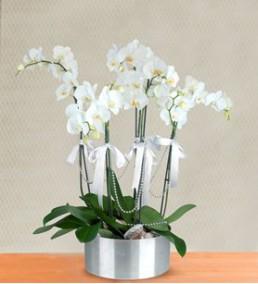 Elazığ Çiçek 16