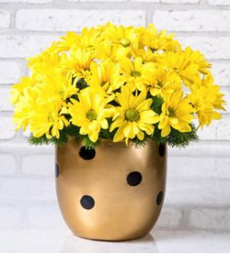 Elazığ Çiçek 32