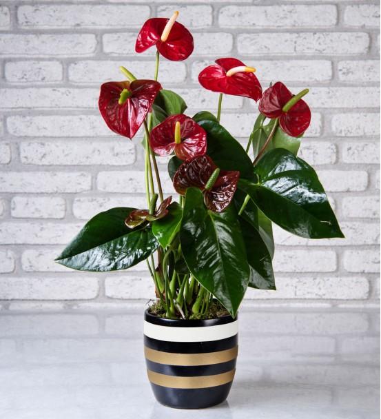 Elazığ Çiçek 35