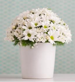 Elazığ Çiçek 37