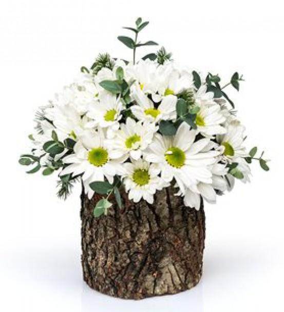 Elazığ Çiçek 55