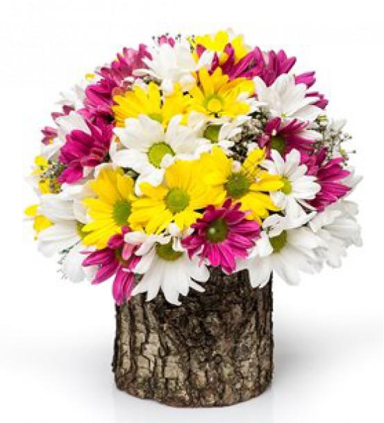Elazığ Çiçek 56
