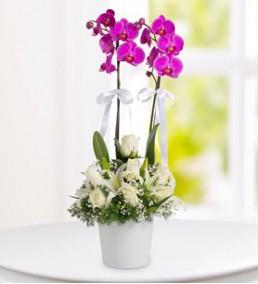 Elazığ Çiçekçi 02